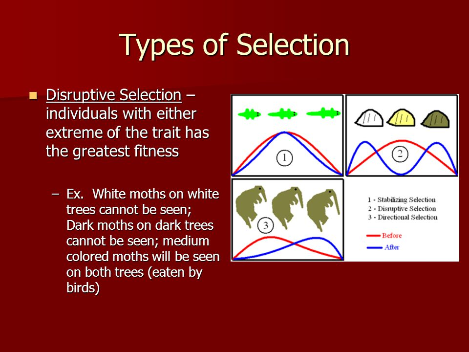 Types of Selection Disruptive Selection – individuals with either extreme of the trait has the greatest fitness.
