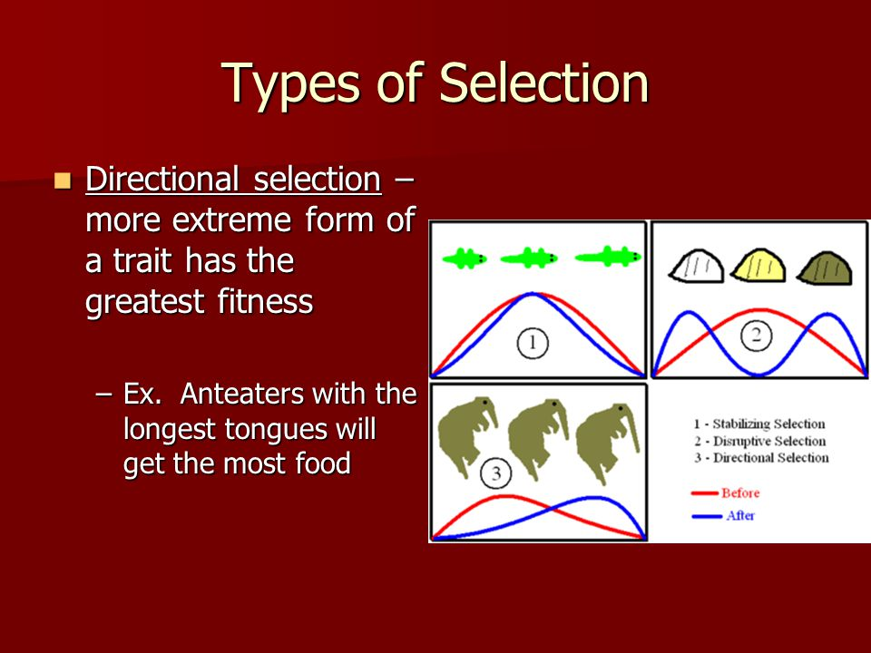 Types of Selection Directional selection – more extreme form of a trait has the greatest fitness.