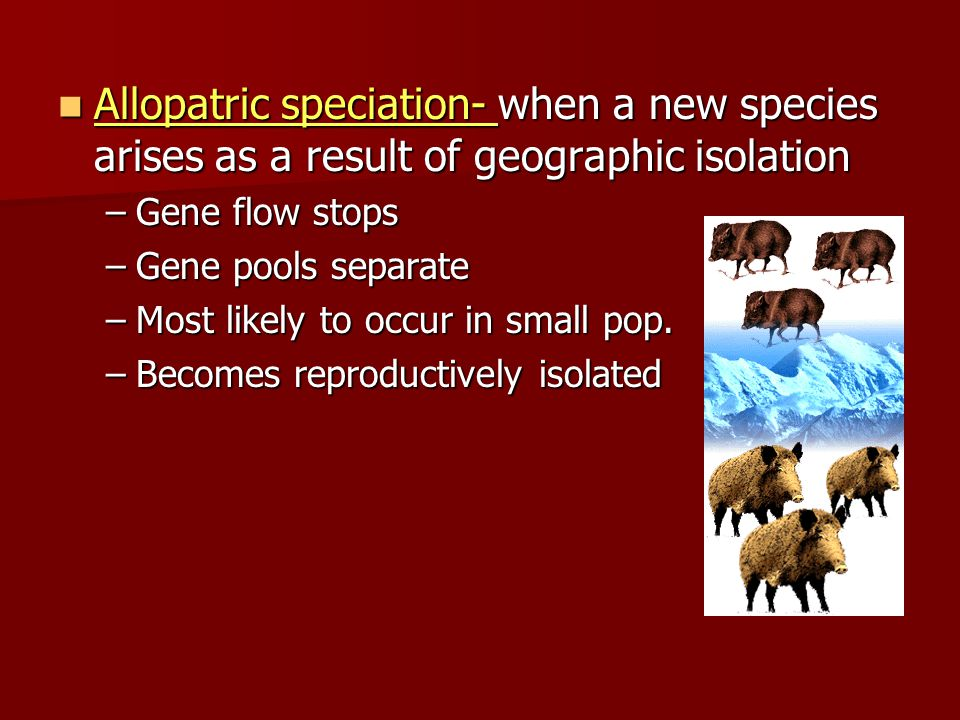 Allopatric speciation- when a new species arises as a result of geographic isolation