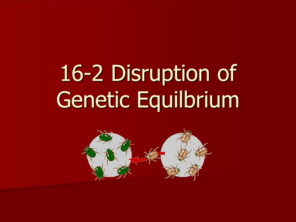 16-2 Disruption of Genetic Equilbrium