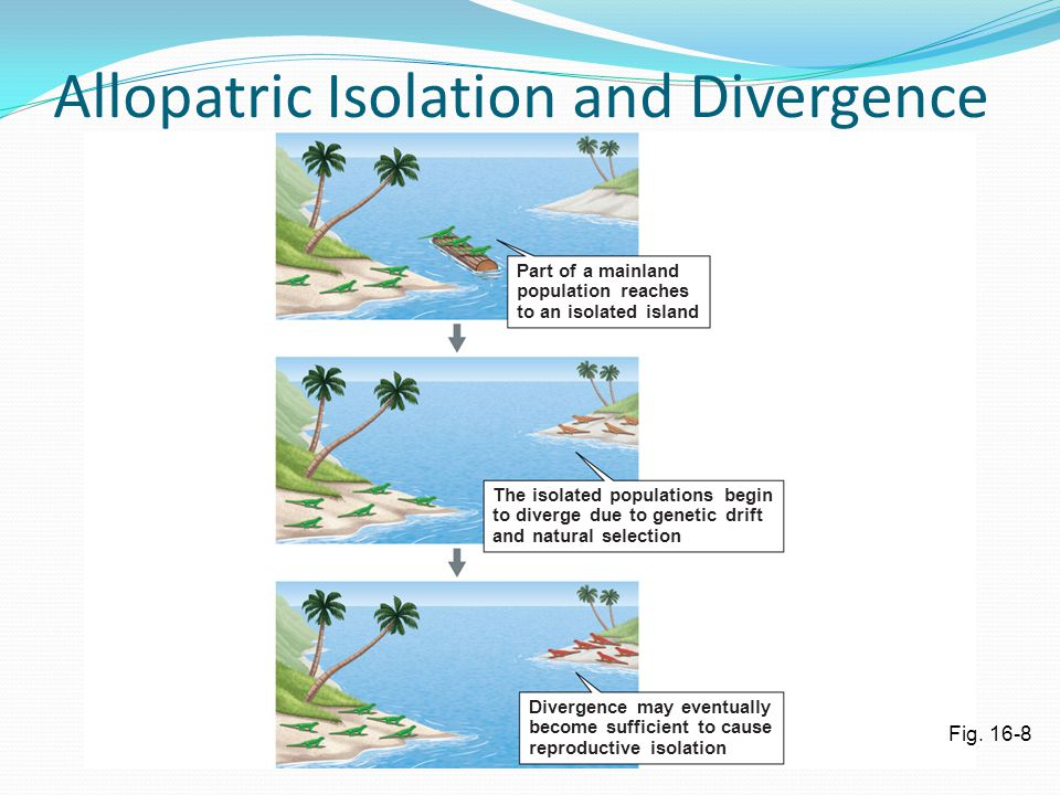 Allopatric Isolation and Divergence