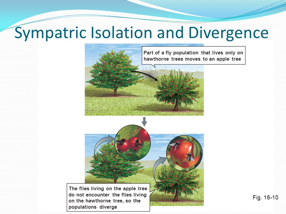 Sympatric Isolation and Divergence