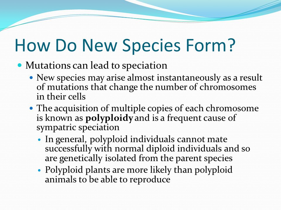 How Do New Species Form Mutations can lead to speciation