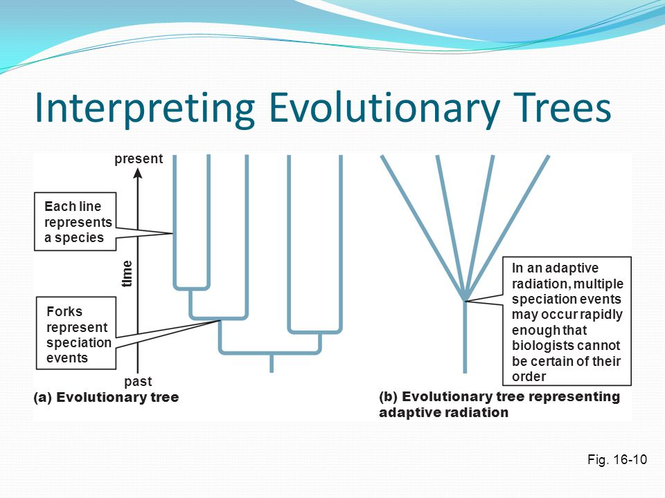 Interpreting Evolutionary Trees