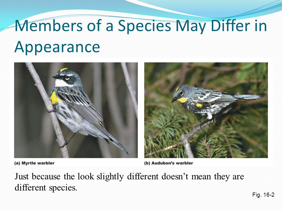 Members of a Species May Differ in Appearance