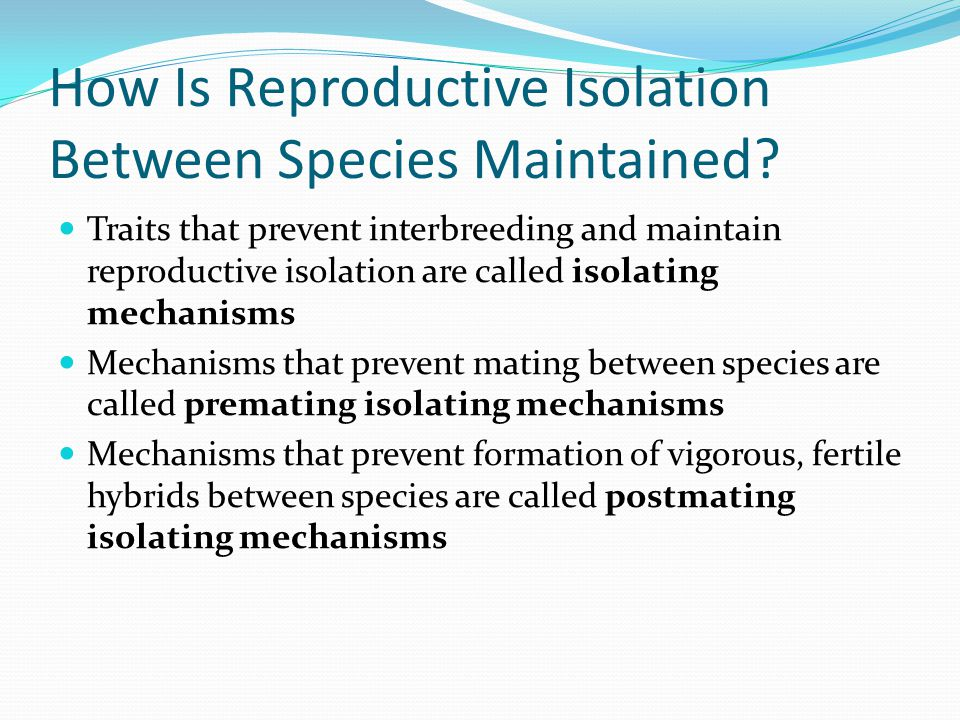 How Is Reproductive Isolation Between Species Maintained