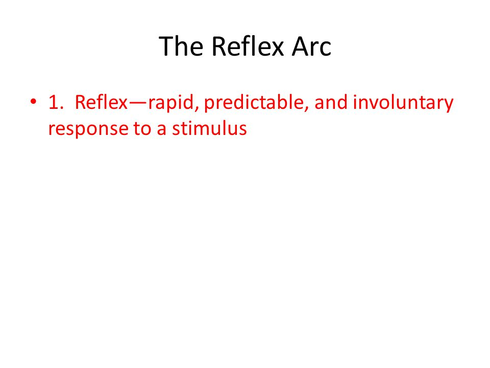 The Reflex Arc 1. Reflex—rapid, predictable, and involuntary response to a stimulus