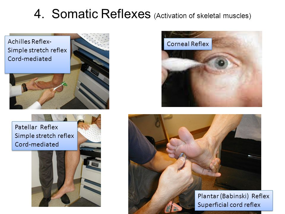 4. Somatic Reflexes (Activation of skeletal muscles)