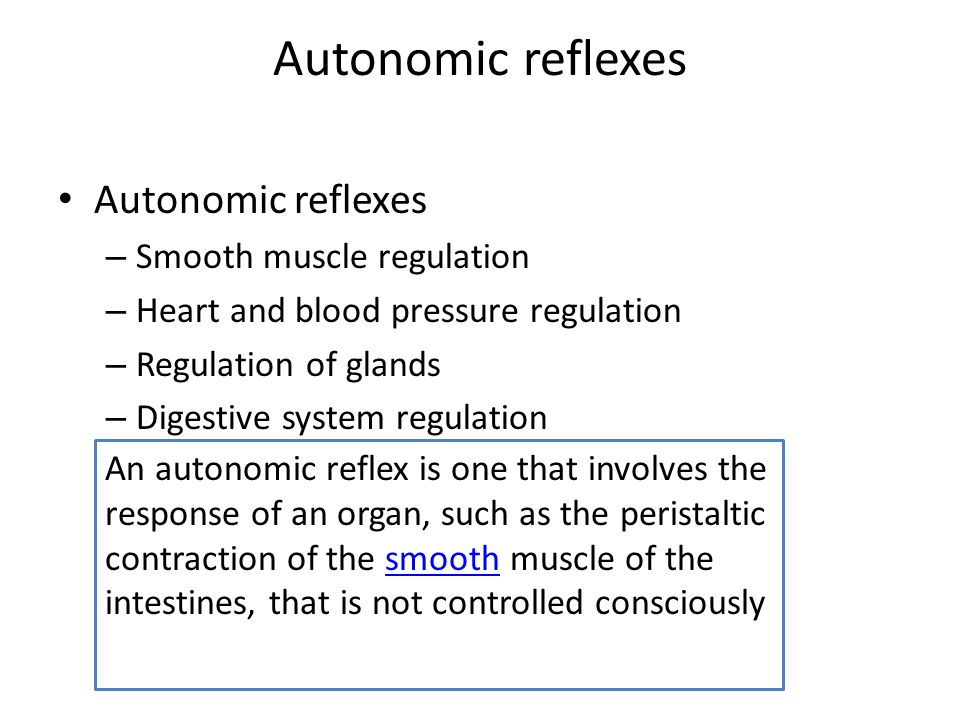 Autonomic reflexes Autonomic reflexes Smooth muscle regulation