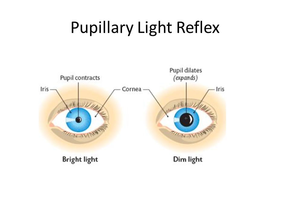 Pupillary Light Reflex