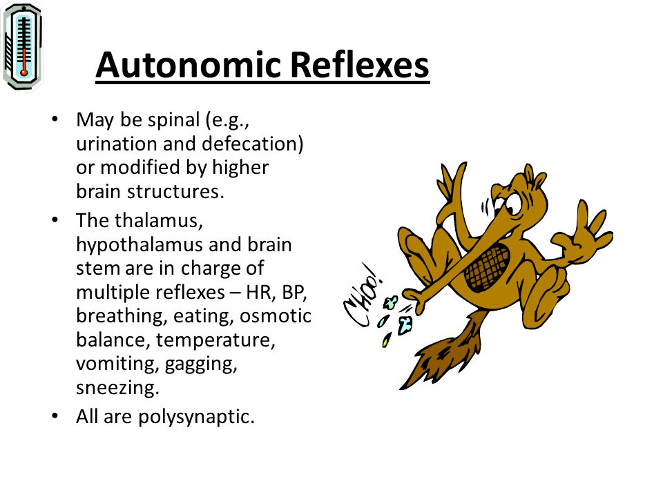 Autonomic Reflexes May be spinal (e.g., urination and defecation) or modified by higher brain structures.