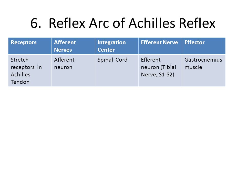 6. Reflex Arc of Achilles Reflex