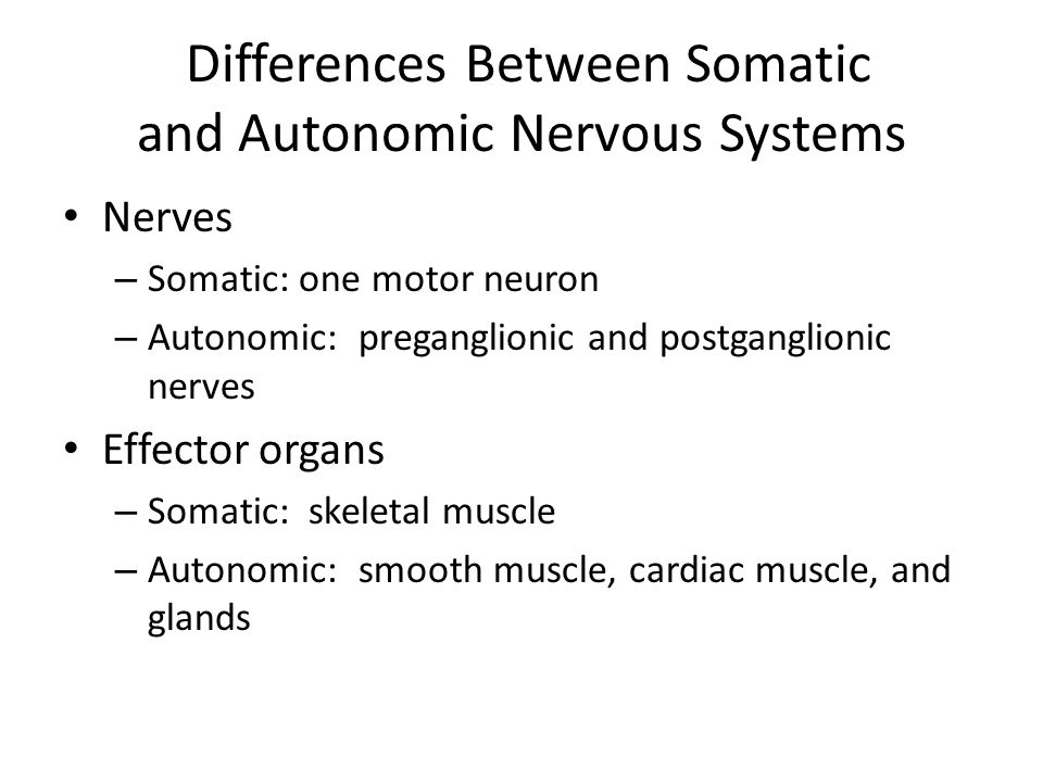 Differences Between Somatic and Autonomic Nervous Systems