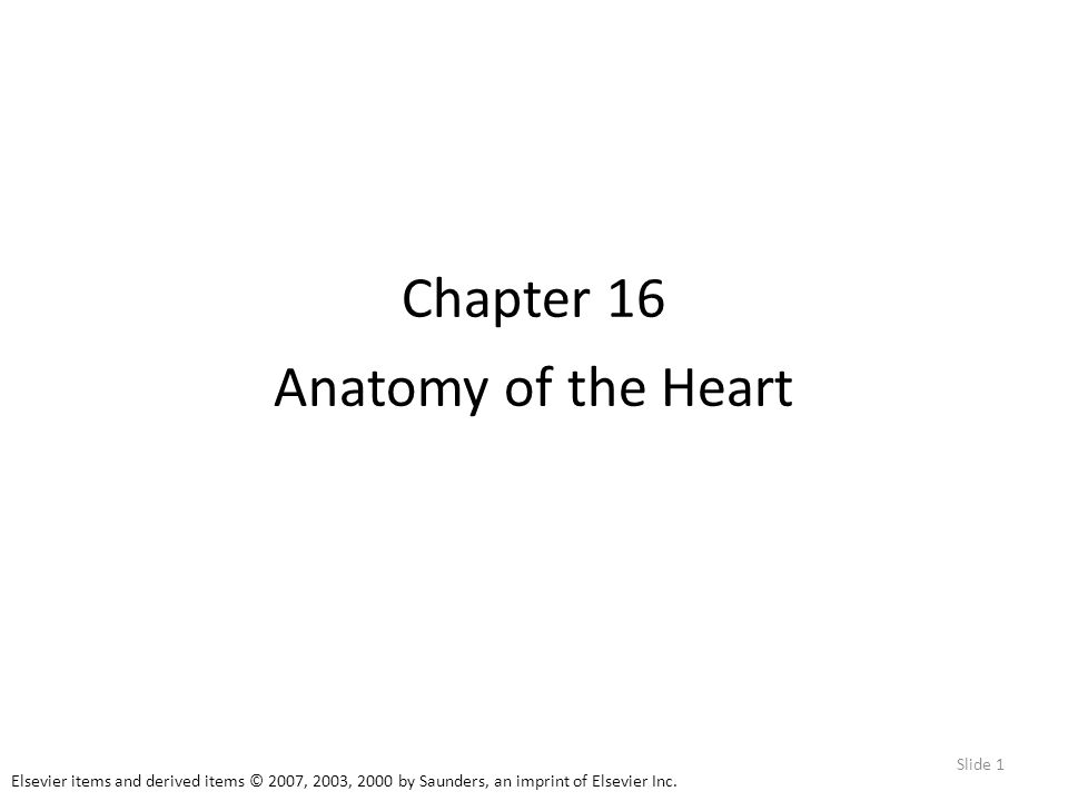 Chapter 16 Anatomy of the Heart