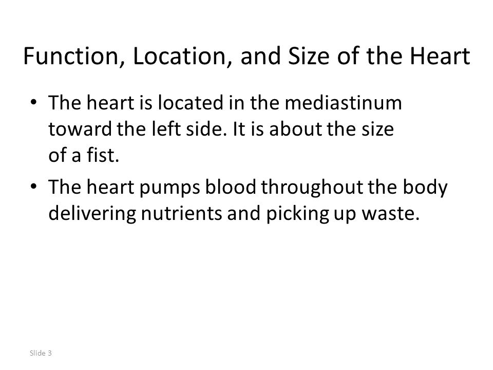 Function, Location, and Size of the Heart