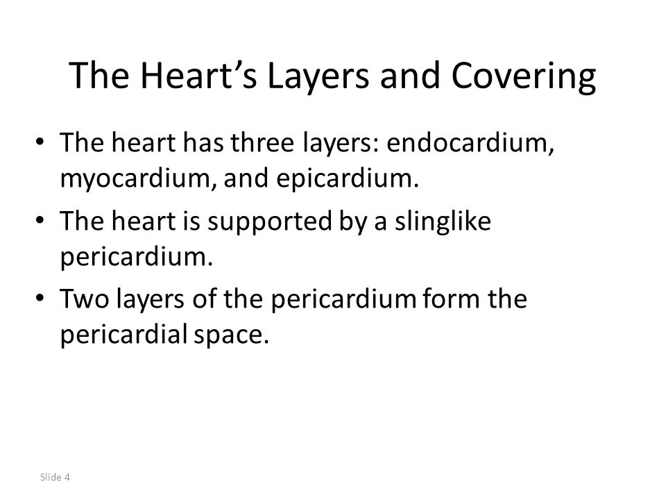 The Heart's Layers and Covering