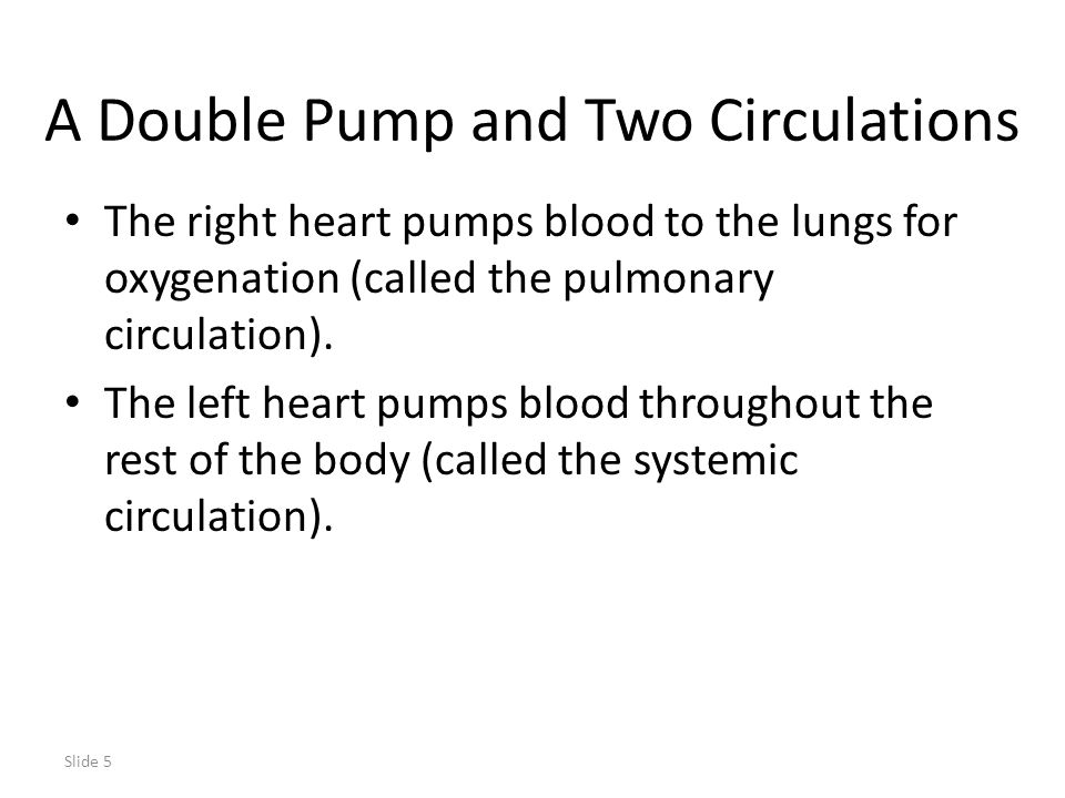 A Double Pump and Two Circulations