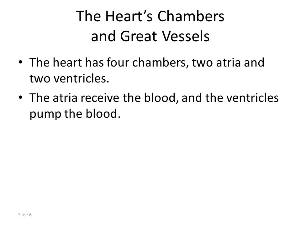 The Heart's Chambers and Great Vessels