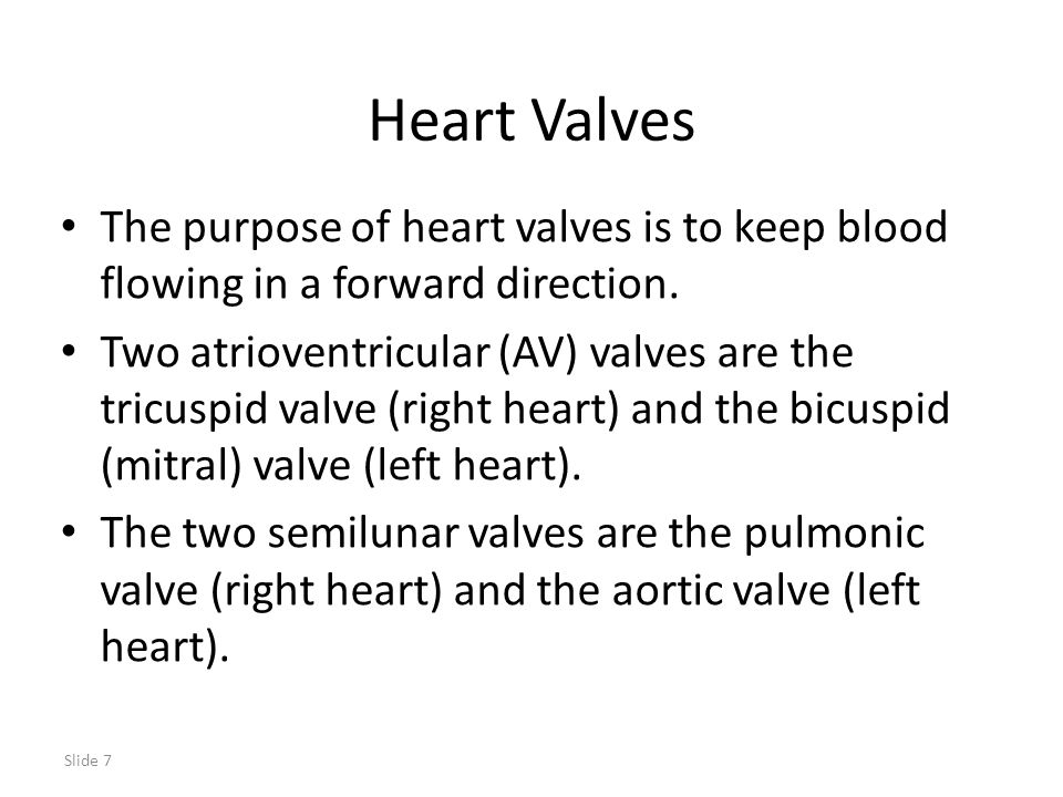 Heart Valves The purpose of heart valves is to keep blood flowing in a forward direction.