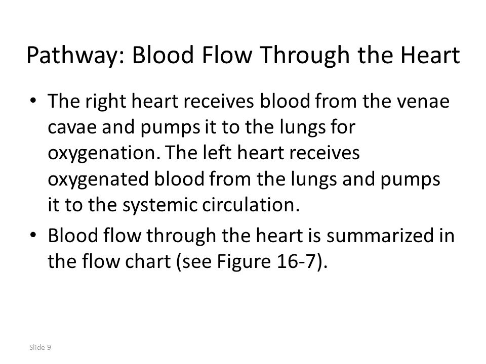 Pathway: Blood Flow Through the Heart