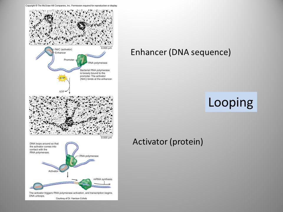 Enhancer (DNA sequence)