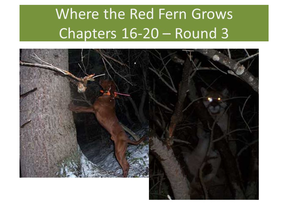Where the Red Fern Grows Chapters 16-20 – Round 3
