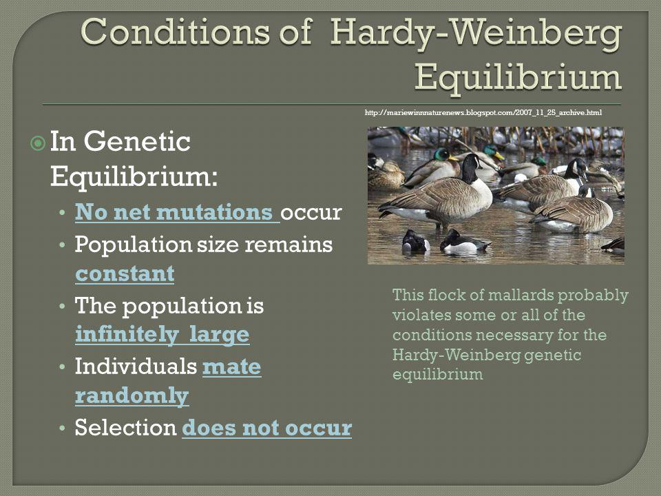 Conditions of Hardy-Weinberg Equilibrium