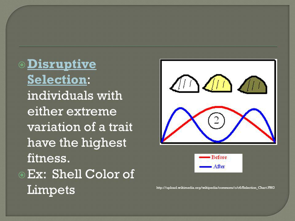 Ex: Shell Color of Limpets