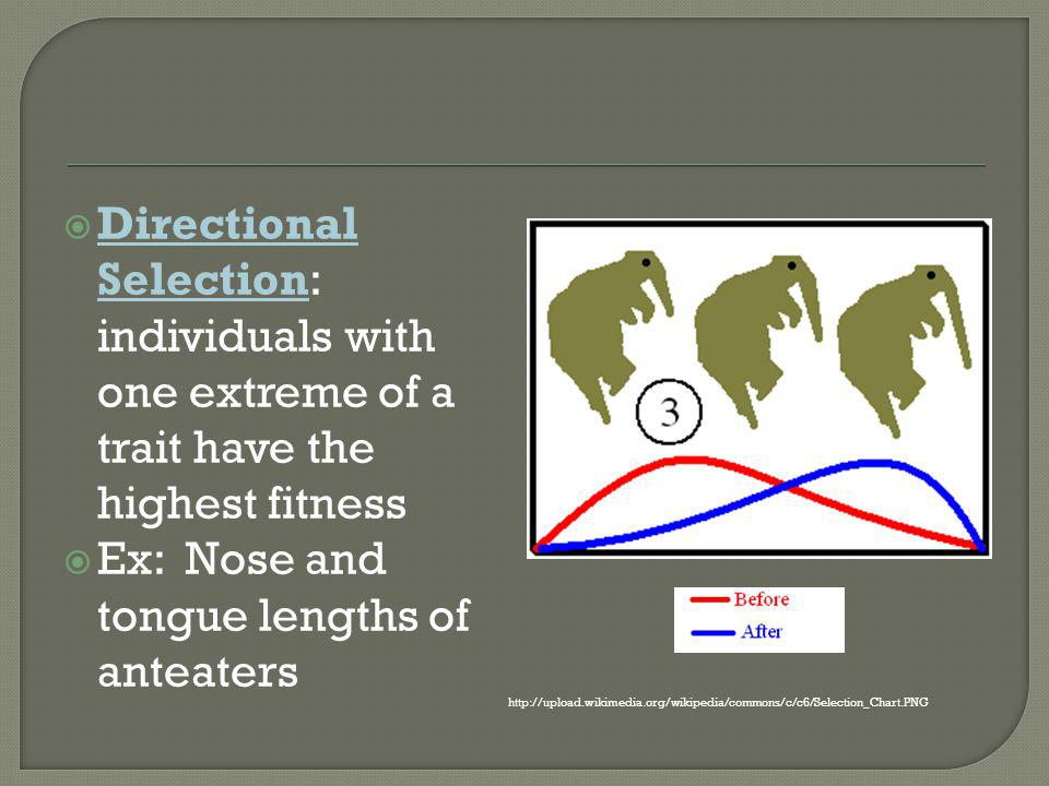 Ex: Nose and tongue lengths of anteaters