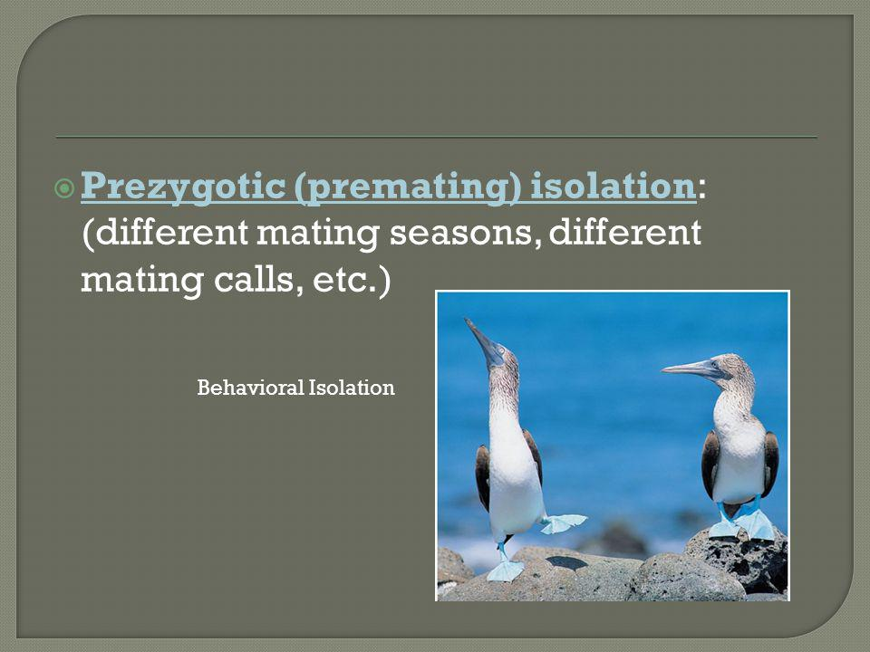 Prezygotic (premating) isolation: (different mating seasons, different mating calls, etc.)