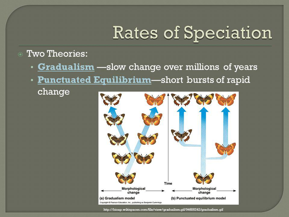 Rates of Speciation Two Theories: