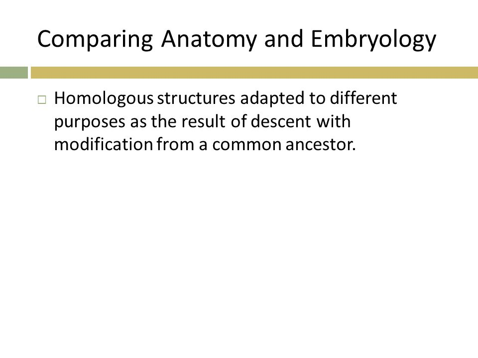 Comparing Anatomy and Embryology