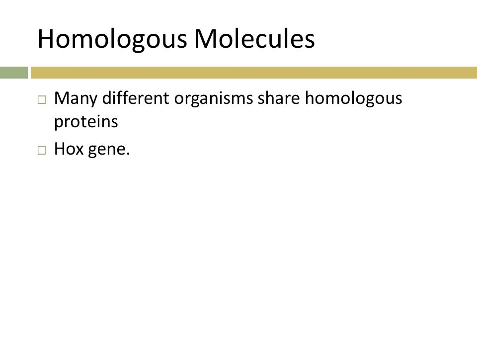 Homologous Molecules Many different organisms share homologous proteins Hox gene.