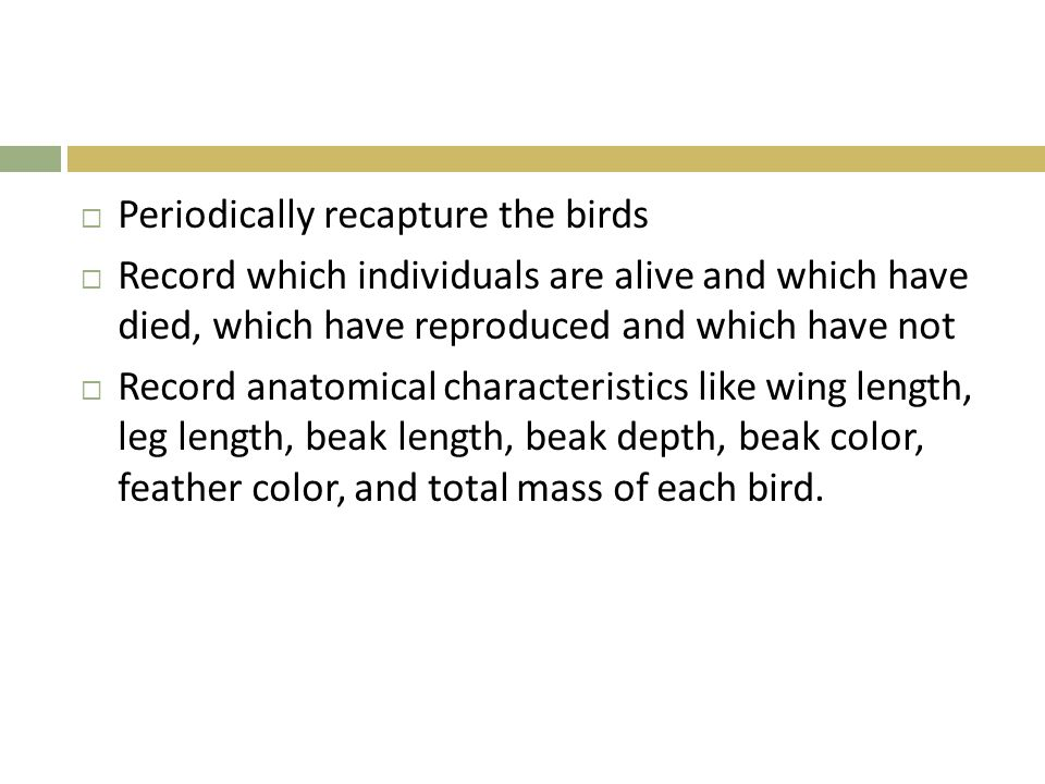 Periodically recapture the birds