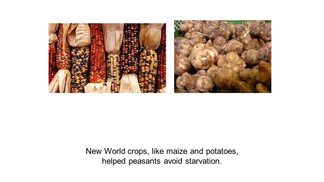 New World crops, like maize and potatoes,