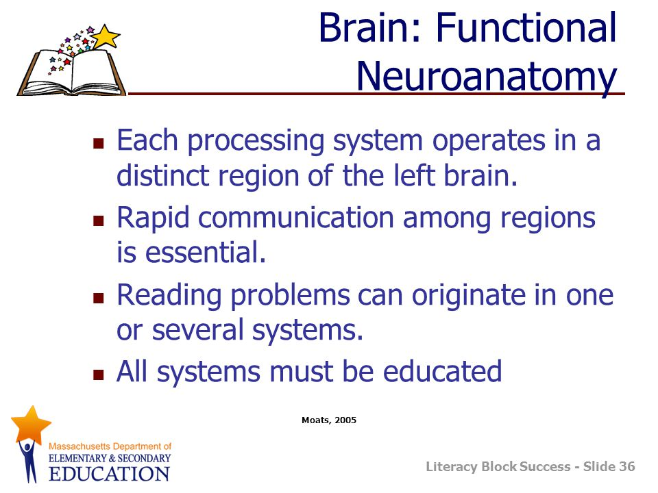 Brain: Functional Neuroanatomy