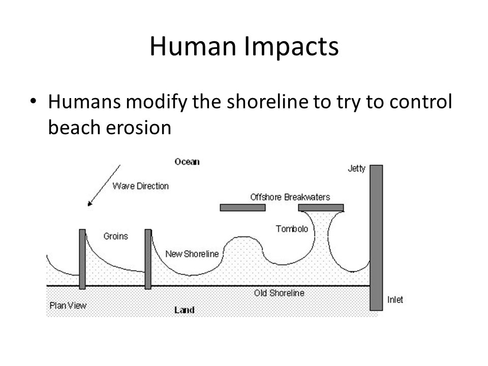 Human Impacts Humans modify the shoreline to try to control beach erosion