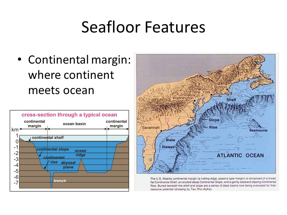 Seafloor Features Continental margin: where continent meets ocean
