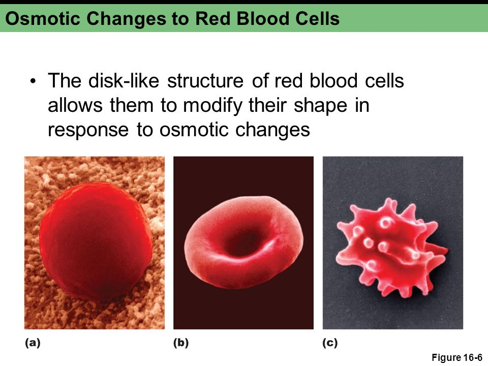 Osmotic Changes to Red Blood Cells