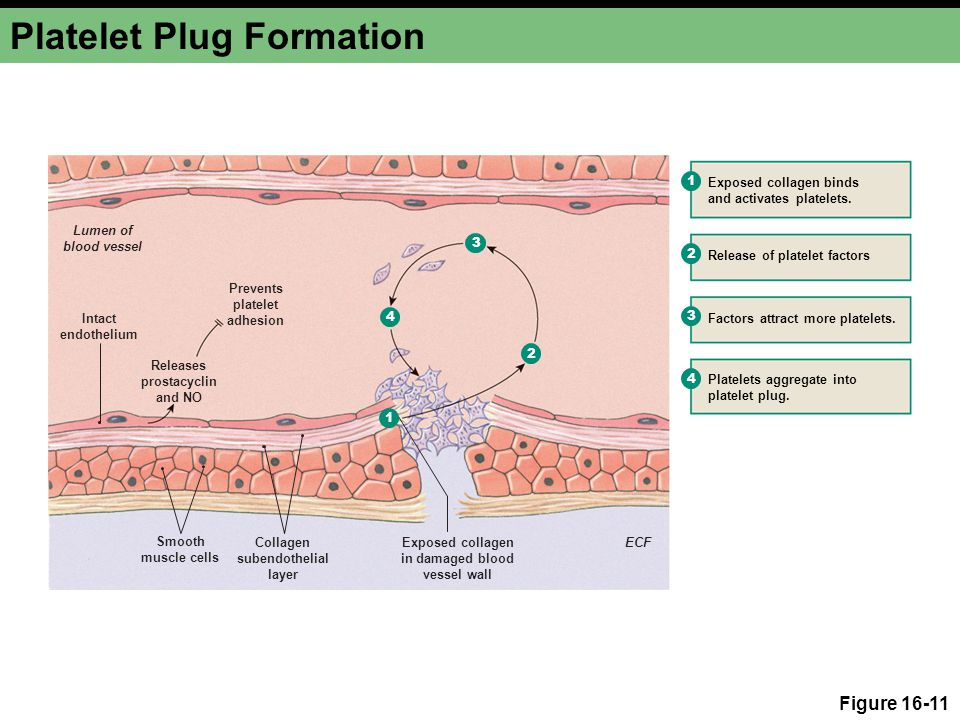 A. Temporary platelet plug formation