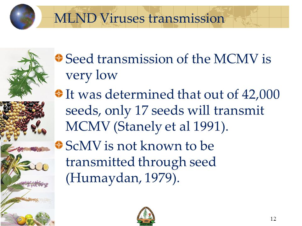 MLND Viruses transmission