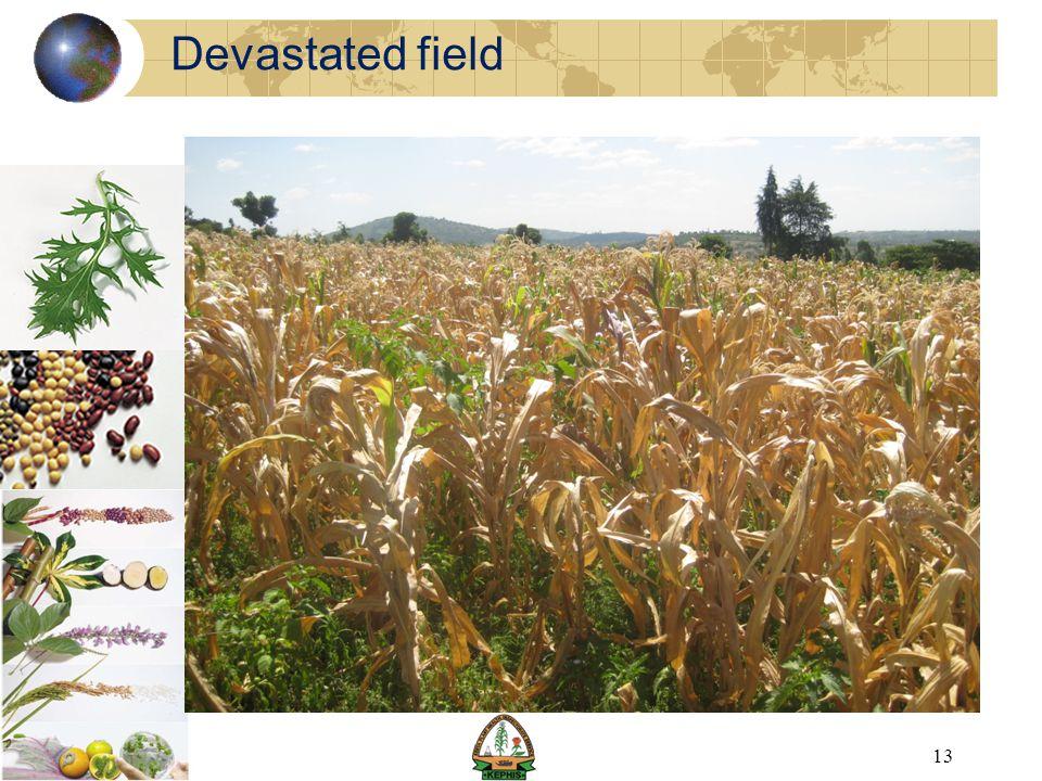 Devastated field