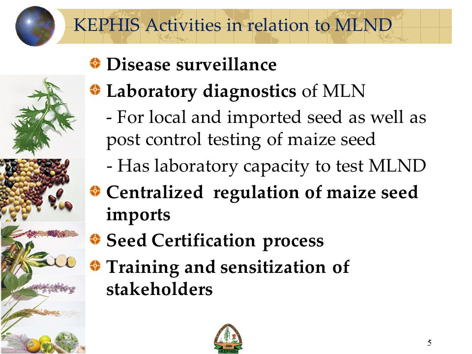 KEPHIS Activities in relation to MLND