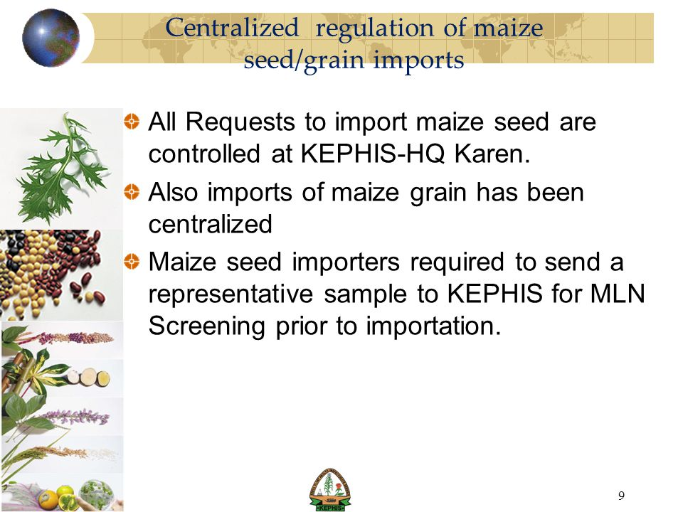 Centralized regulation of maize seed/grain imports