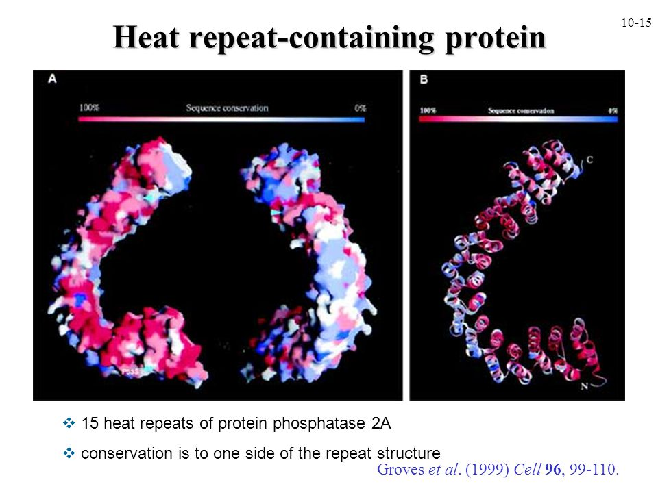 Heat repeat-containing protein
