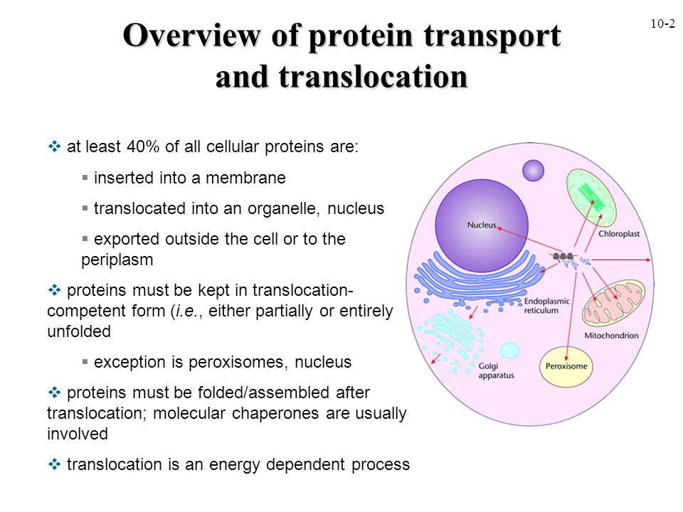 Overview of protein transport and translocation