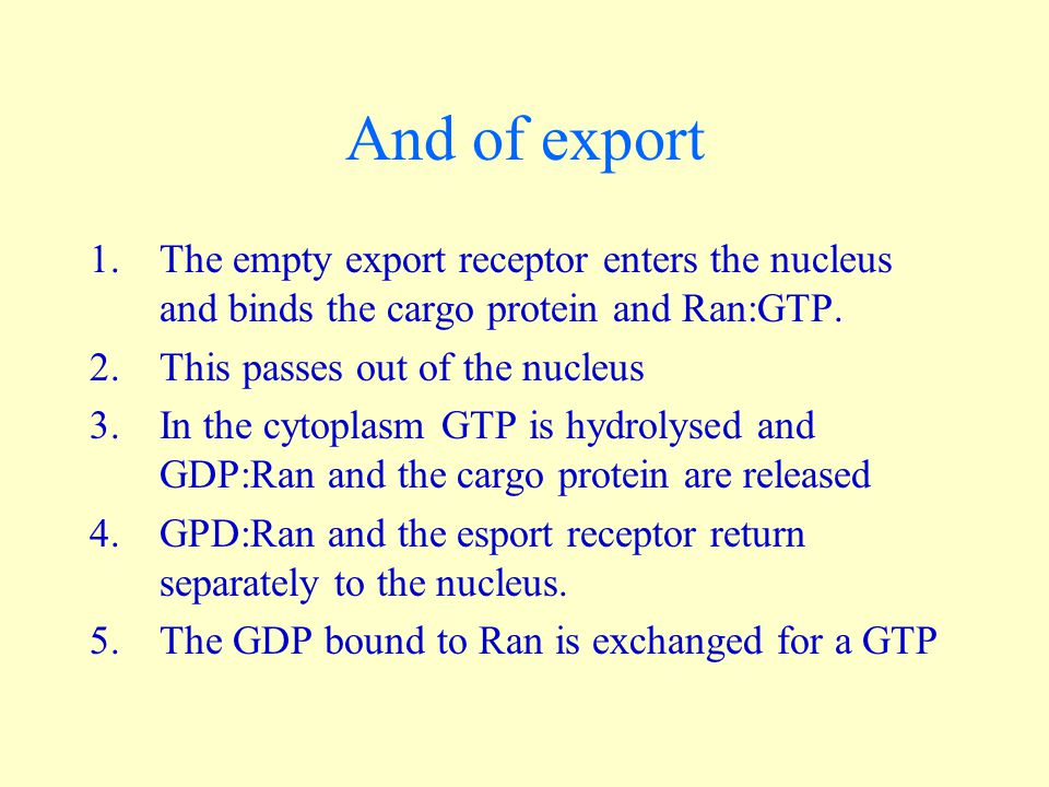 And of export The empty export receptor enters the nucleus and binds the cargo protein and Ran:GTP.