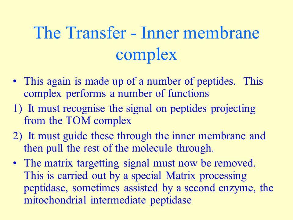 The Transfer - Inner membrane complex