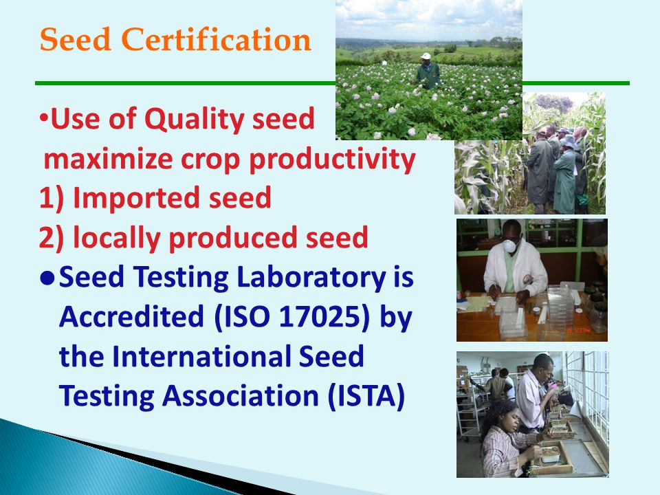 Seed Certification Use of Quality seed maximize crop productivity. 1) Imported seed. 2) locally produced seed.
