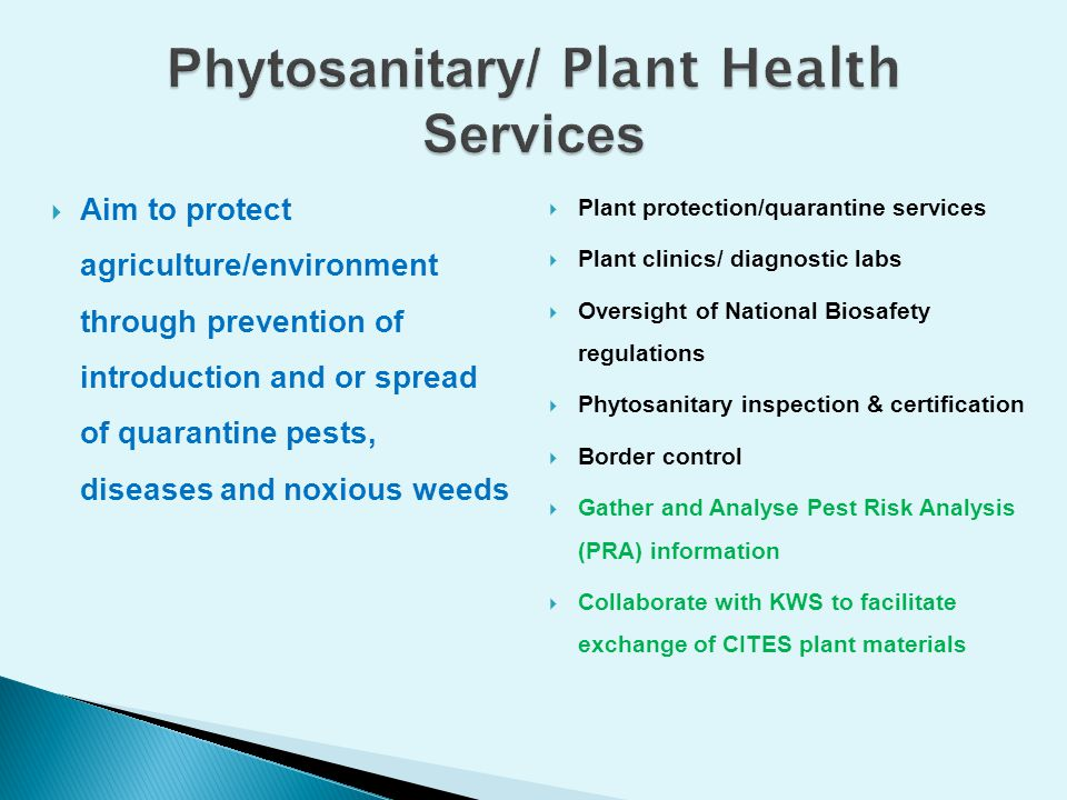 Phytosanitary/ Plant Health Services